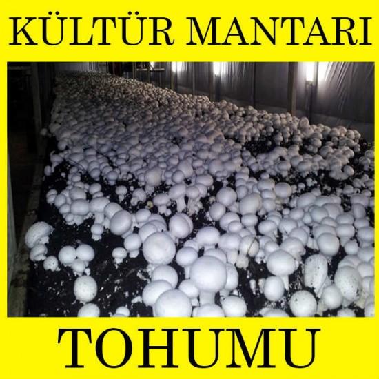 Kültür Mantarı Miseli Tohumu 500 gr. ( Rehber Hediyeli )