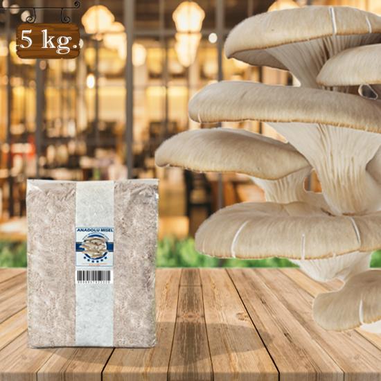 İstiridye Mantarı Tohumu 5 kg Hk35 Yeni Mahsul ( Rehber Hediyeli )